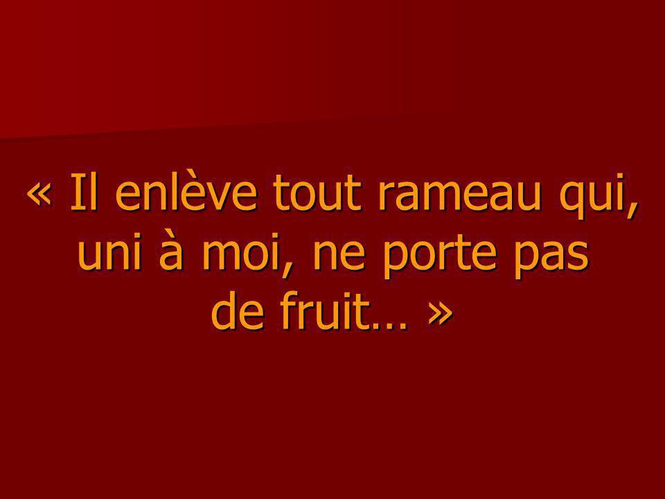 « Il enlève tout rameau qui, uni à moi, ne porte pas de fruit… »
