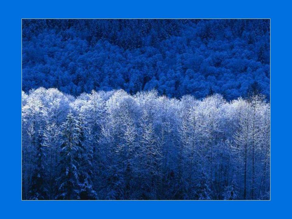 Tout comme la nature, À l hiver, le déploiement de son manteau blanc Passant de la tempête aux grands froids Apporte les craquements et le silence… Chacun dépose son étoile dans le ciel voulant immortaliser ses instants… Nuit envoûtante