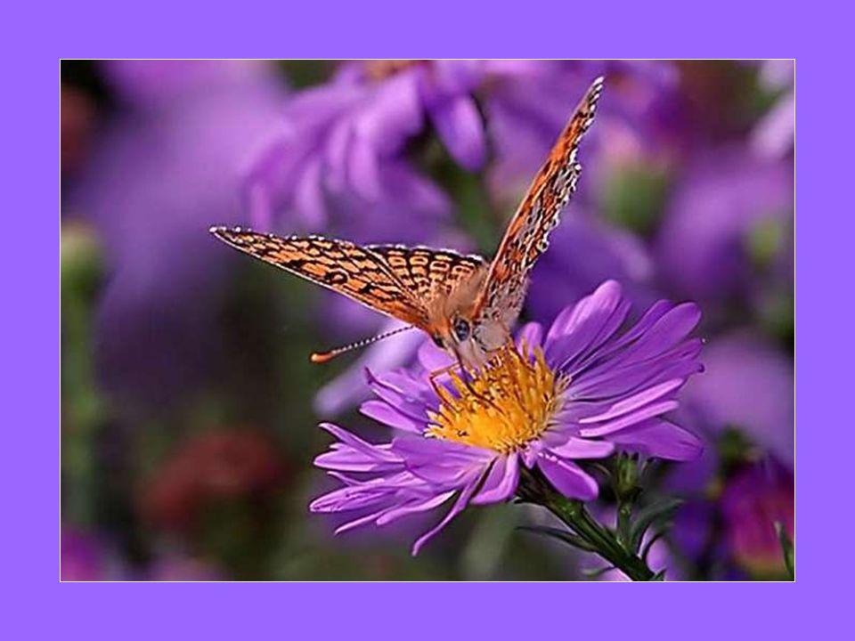 Tout comme l arbre, Au printemps, les doux bourgeons de la vie Passant de l embryon à l être tout petit Apportent la joie et le bonheur… Chacun grandit au fil du temps Déployant son feuillage majestueux Lumière de vie…