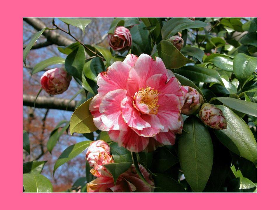 Tout comme la nature, À l été, les verts feuillages de la vie Passant de la témérité à la stabilité Apportent la beauté et la vigueur… Chacun grandit en son temps Implantant ses racines et ses fruits… Soleil du midi