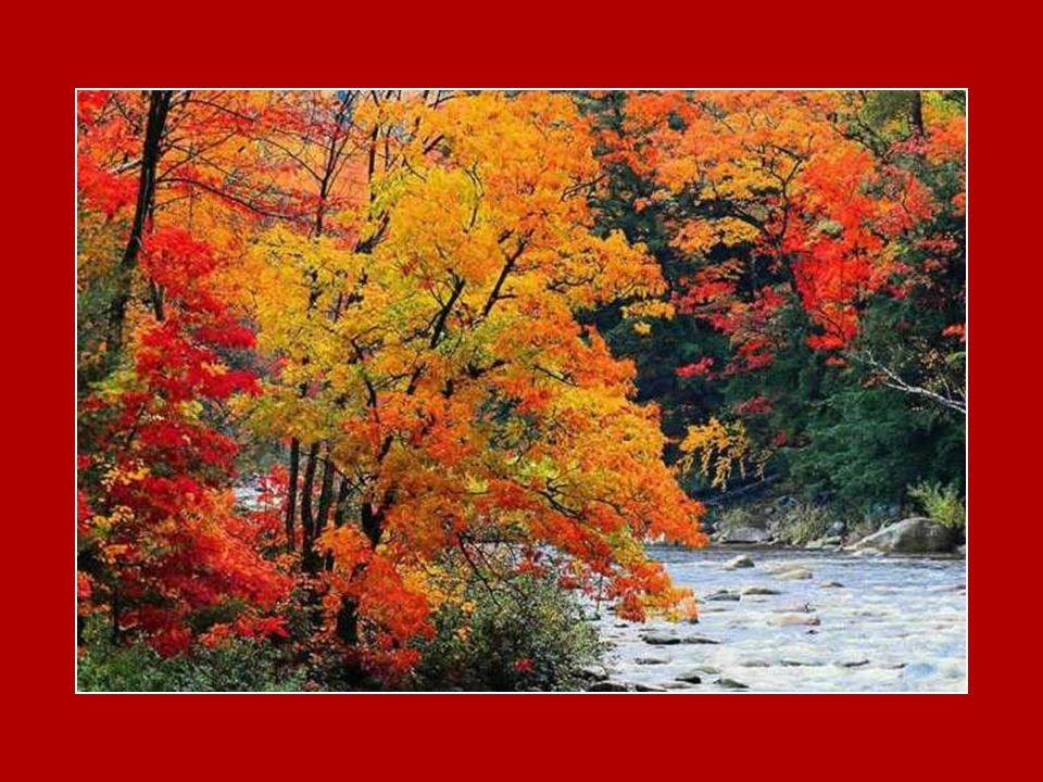 Tout comme l arbre, À l automne, les couleurs tendres de la vie Passant de l expérience à la sagesse Apportent le bruissement des feuilles et la fragilité… Chacun avance avec dignité Exposant les fruits qu il a portés… Chemin du crépuscule