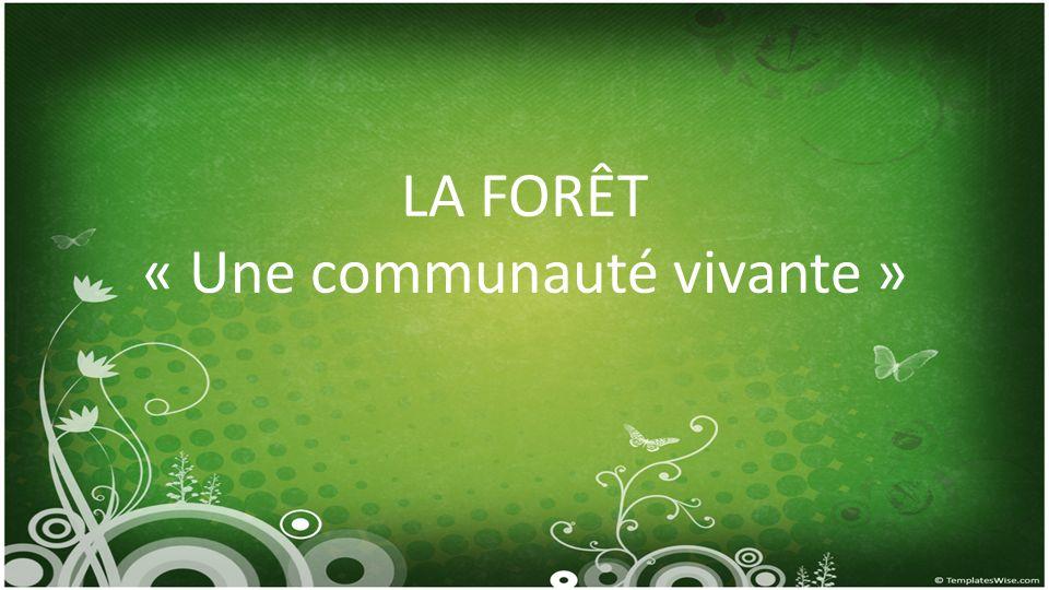 LA FORÊT « Une communauté vivante »