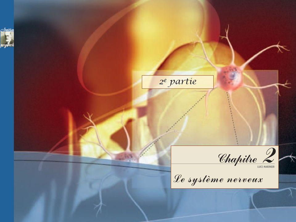 © Groupe Beauchemin éditeur 2005 - Conception et réalisation de Pierre CLOUTIER et Guy PARENT Un cercle est dans le champ visuel droit d un patient au cerveau dédoublé.