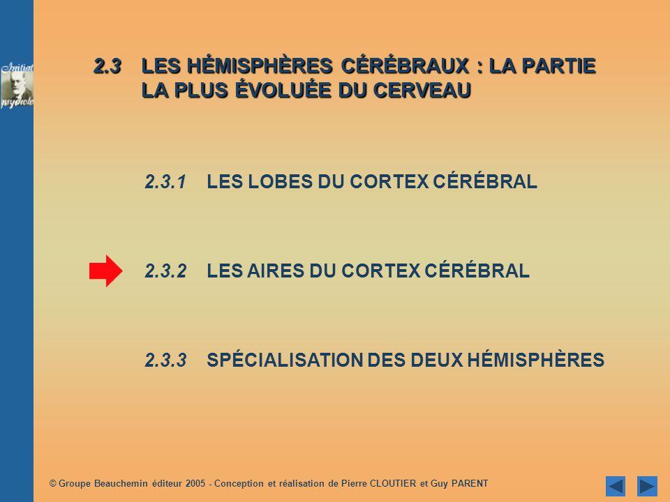 © Groupe Beauchemin éditeur 2005 - Conception et réalisation de Pierre CLOUTIER et Guy PARENT 2.3LES HÉMISPHÈRES CÉRÉBRAUX : LA PARTIE LA PLUS ÉVOLUÉE DU CERVEAU 2.3.1 LES LOBES DU CORTEX CÉRÉBRAL 2.3.2 LES AIRES DU CORTEX CÉRÉBRAL 2.3.3SPÉCIALISATION DES DEUX HÉMISPHÈRES