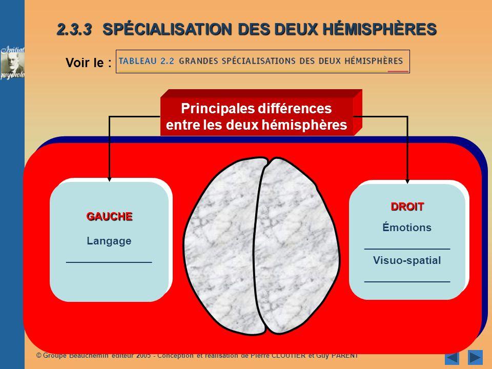 © Groupe Beauchemin éditeur 2005 - Conception et réalisation de Pierre CLOUTIER et Guy PARENT Principales différences entre les deux hémisphères GAUCHE Langage ______________GAUCHE Langage ______________ DROIT Émotions ______________ Visuo-spatial ______________DROIT Émotions ______________ Visuo-spatial ______________ 2.3.3SPÉCIALISATION DES DEUX HÉMISPHÈRES Voir le :