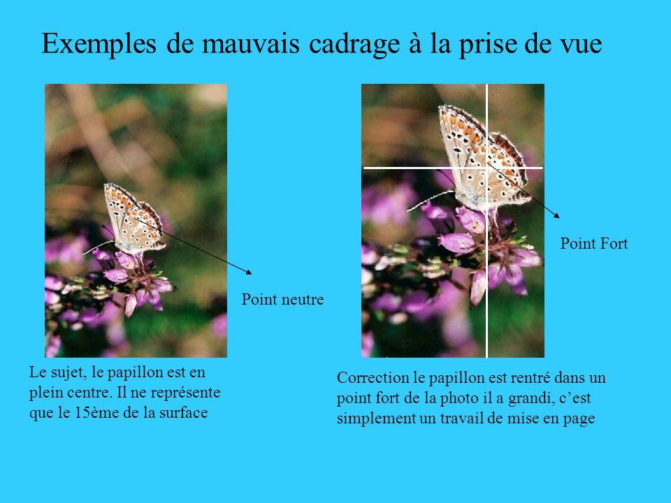 Exemples de mauvais cadrage à la prise de vue Le sujet, le papillon est en plein centre. Il ne représente que le 15ème de la surface Correction le pap