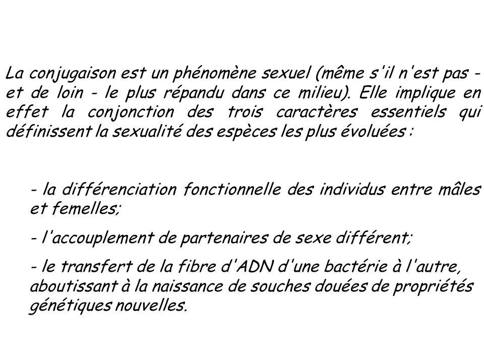La conjugaison est un phénomène sexuel (même s'il n'est pas - et de loin - le plus répandu dans ce milieu). Elle implique en effet la conjonction des