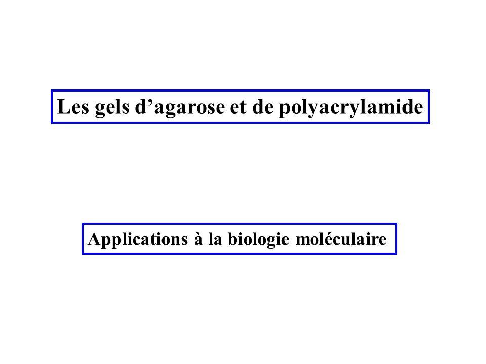Les gels dagarose et de polyacrylamide Applications à la biologie moléculaire