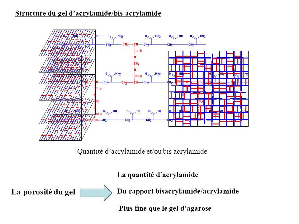 Structure du gel dacrylamide/bis-acrylamide La quantité d'acrylamide Du rapport bisacrylamide/acrylamide Quantité dacrylamide et/ou bis acrylamide La