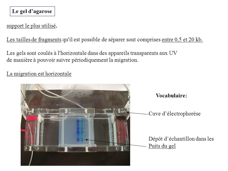 Le gel dagarose support le plus utilisé. Les tailles de fragments qu'il est possible de séparer sont comprises entre 0,5 et 20 kb. Les gels sont coulé