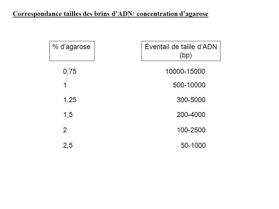 Correspondance tailles des brins dADN/ concentration dagarose % dagaroseÉventail de taille dADN (bp) 0,75 1 1,25 1,5 2 2,5 10000-15000 500-10000 300-5