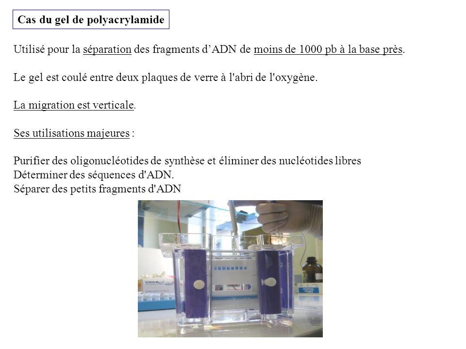 Cas du gel de polyacrylamide Utilisé pour la séparation des fragments dADN de moins de 1000 pb à la base près. Le gel est coulé entre deux plaques de
