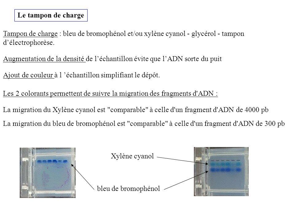 Le tampon de charge Tampon de charge : bleu de bromophénol et/ou xylène cyanol - glycérol - tampon délectrophorèse. Les 2 colorants permettent de suiv