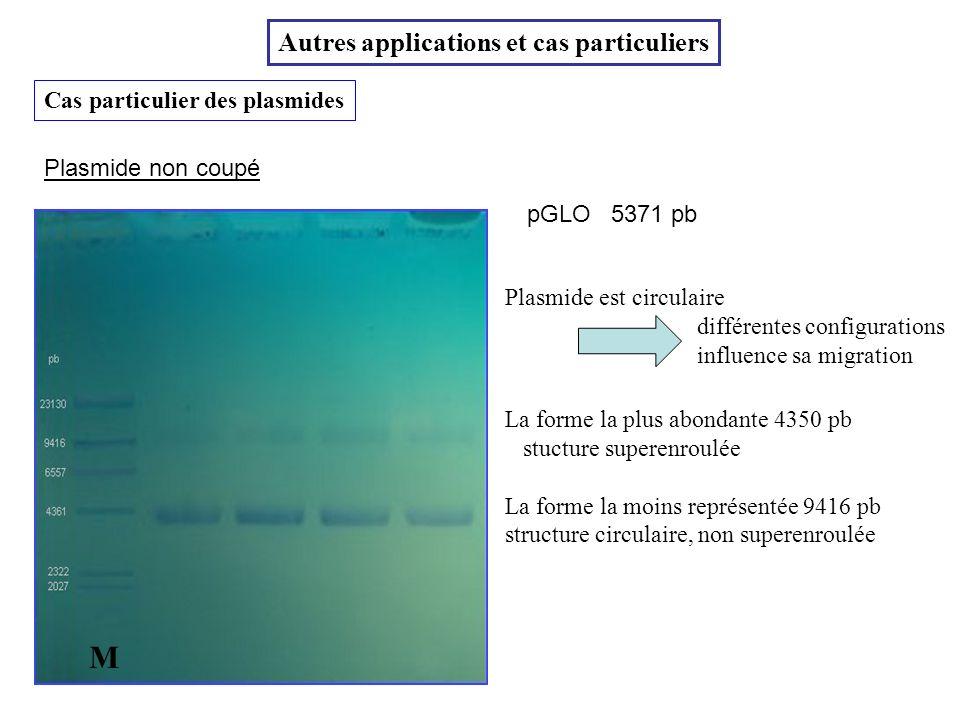 Cas particulier des plasmides Autres applications et cas particuliers pGLO M 5371 pb Plasmide est circulaire différentes configurations influence sa m