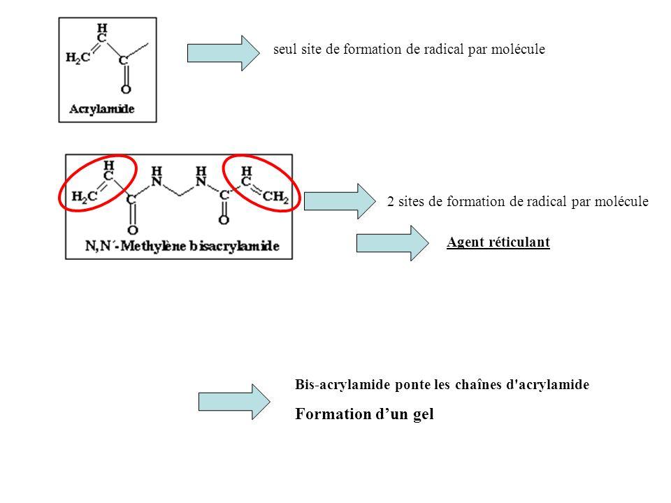 seul site de formation de radical par molécule 2 sites de formation de radical par molécule Bis-acrylamide ponte les chaînes d'acrylamide Formation du