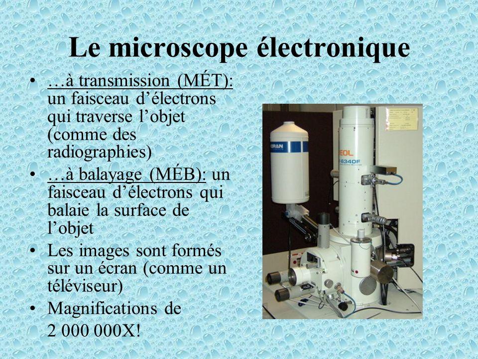 Le microscope électronique à transmission (MÉT): –Utilisé pour étudier la structure interne des cellules (ex: organites) Le microscope électronique à balayage (MÉB): –Utilisé pour étudier la surface dun spécimen.
