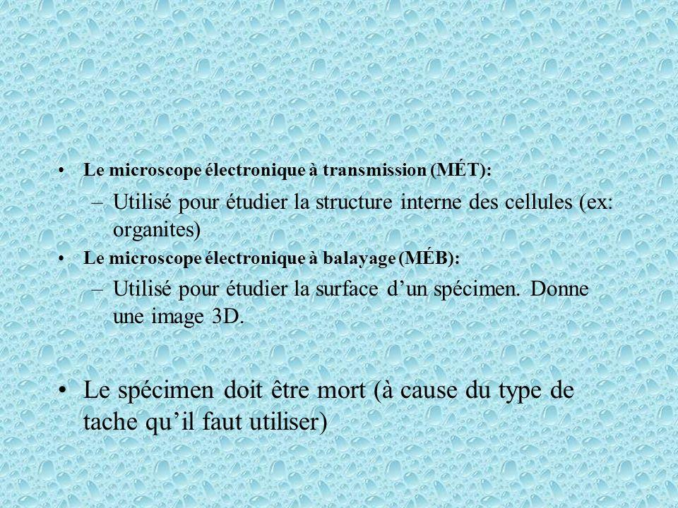 Le microscope électronique à transmission (MÉT): –Utilisé pour étudier la structure interne des cellules (ex: organites) Le microscope électronique à