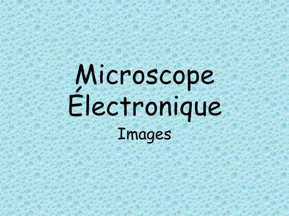 Microscope Électronique Images