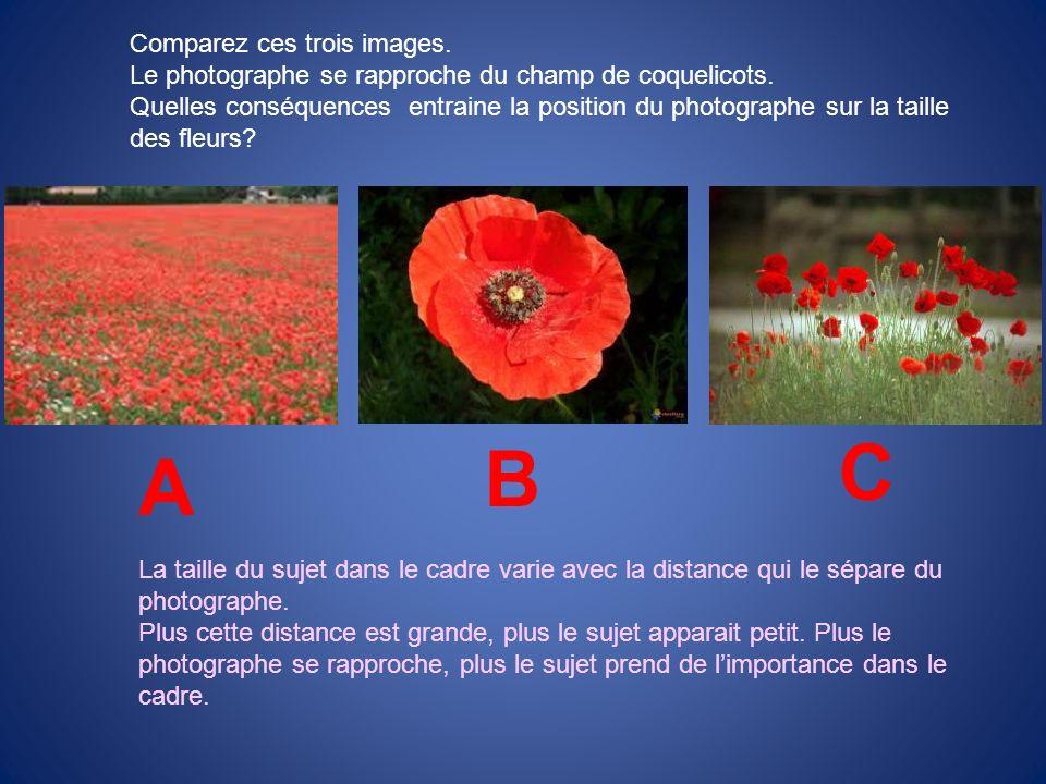 Comparez ces trois images. Le photographe se rapproche du champ de coquelicots. Quelles conséquences entraine la position du photographe sur la taille