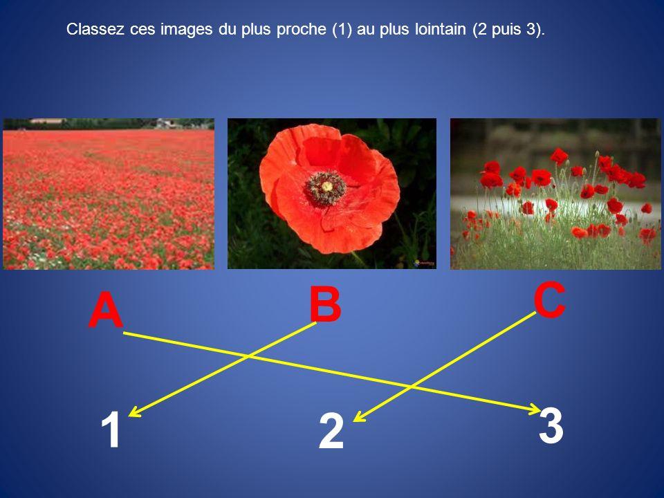 Classez ces images du plus proche (1) au plus lointain (2 puis 3). A B C 1 2 3