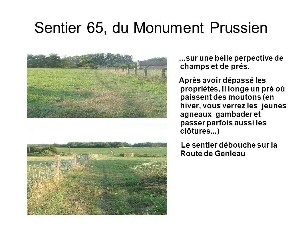 Sentier 65, du Monument Prussien...sur une belle perpective de champs et de prés. Après avoir dépassé les propriétés, il longe un pré où paissent des