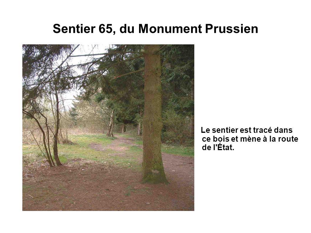 Sentier 65, du Monument Prussien Le sentier est tracé dans ce bois et mène à la route de l'État.