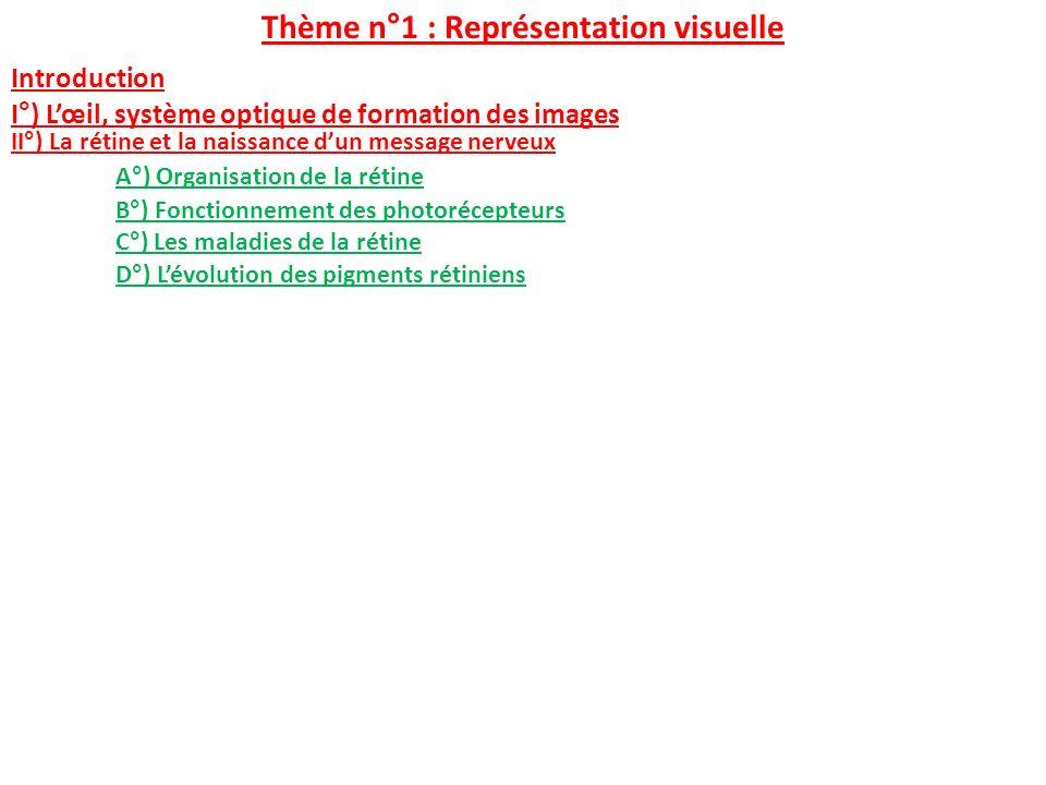 Thème n°1 : Représentation visuelle Introduction I°) Lœil, système optique de formation des images II°) La rétine et la naissance dun message nerveux