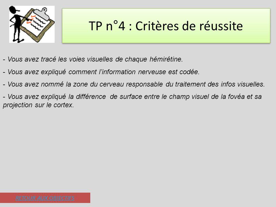 TP n°4 : Critères de réussite - Vous avez tracé les voies visuelles de chaque hémirétine. - Vous avez expliqué comment linformation nerveuse est codée