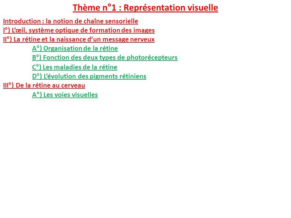 Thème n°1 : Représentation visuelle I°) Lœil, système optique de formation des images II°) La rétine et la naissance dun message nerveux A°) Organisat