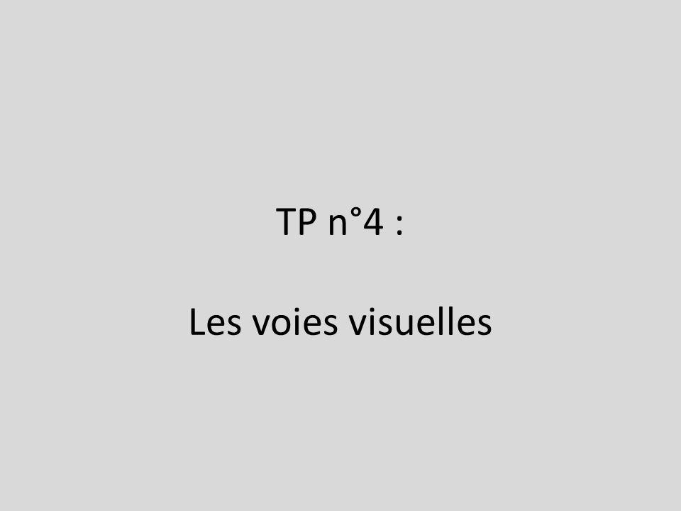 TP n°4 : Les voies visuelles
