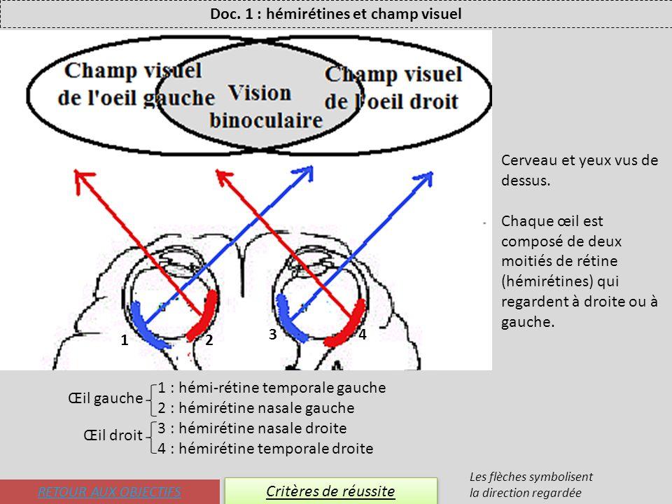 RETOUR AUX OBJECTIFS Critères de réussite Doc. 1 : hémirétines et champ visuel Les flèches symbolisent la direction regardée Cerveau et yeux vus de de