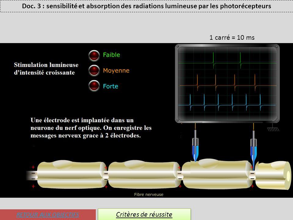 RETOUR AUX OBJECTIFS Critères de réussite Doc. 3 : sensibilité et absorption des radiations lumineuse par les photorécepteurs 1 carré = 10 ms