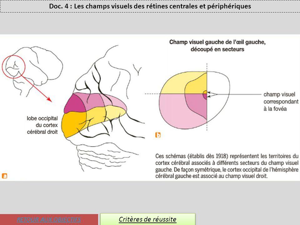 RETOUR AUX OBJECTIFS Critères de réussite Doc. 4 : Les champs visuels des rétines centrales et périphériques