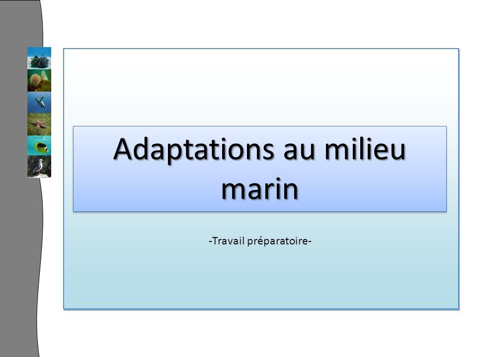 Adaptations au milieu marin -Travail préparatoire-