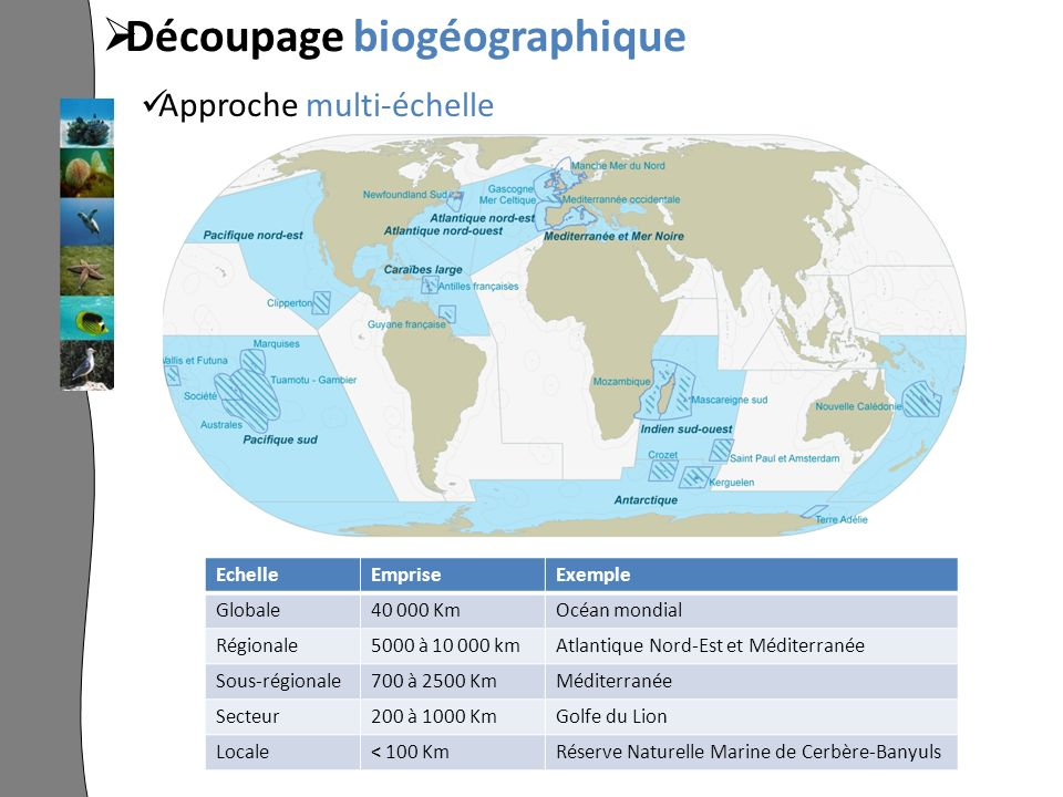 EchelleEmpriseExemple Globale40 000 KmOcéan mondial Régionale5000 à 10 000 kmAtlantique Nord-Est et Méditerranée Sous-régionale700 à 2500 KmMéditerranée Secteur200 à 1000 KmGolfe du Lion Locale< 100 KmRéserve Naturelle Marine de Cerbère-Banyuls Découpage biogéographique Approche multi-échelle