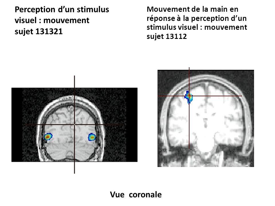 Perception dun stimulus visuel : mouvement sujet 131321 Mouvement de la main en réponse à la perception dun stimulus visuel : mouvement sujet 13112 Vue sagittale
