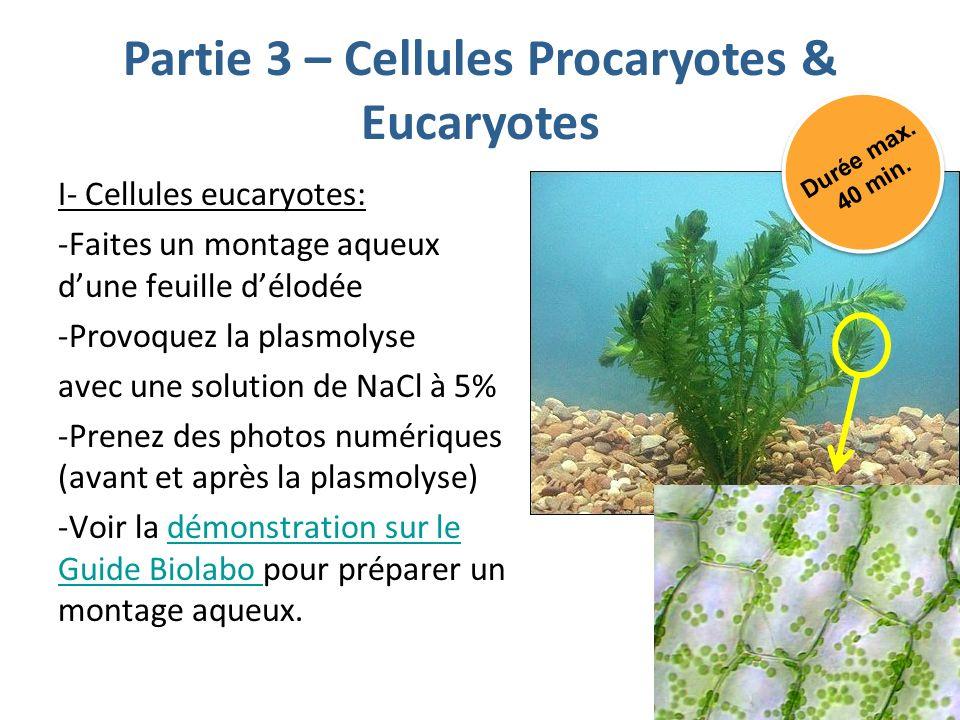 Partie 3 – Cellules Procaryotes & Eucaryotes I- Cellules eucaryotes: -Faites un montage aqueux dune feuille délodée -Provoquez la plasmolyse avec une solution de NaCl à 5% -Prenez des photos numériques (avant et après la plasmolyse) -Voir la démonstration sur le Guide Biolabo pour préparer un montage aqueux.démonstration sur le Guide Biolabo Durée max.