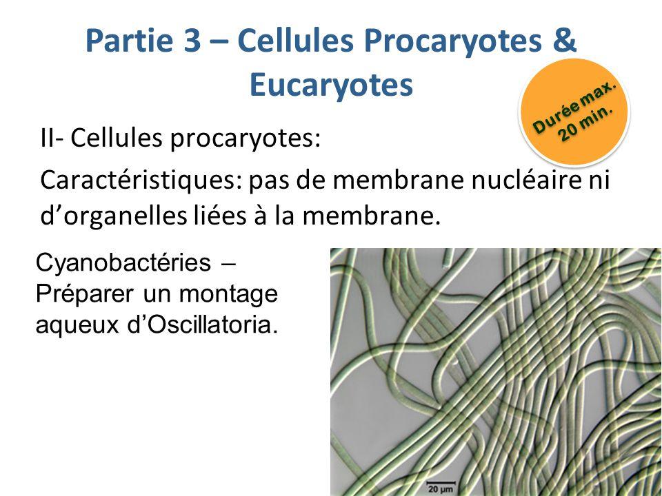 Partie 3 – Cellules Procaryotes & Eucaryotes II- Cellules procaryotes: Caractéristiques: pas de membrane nucléaire ni dorganelles liées à la membrane.