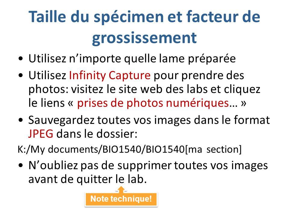 Taille du spécimen et facteur de grossissement Utilisez nimporte quelle lame préparée Utilisez Infinity Capture pour prendre des photos: visitez le site web des labs et cliquez le liens « prises de photos numériques… » Sauvegardez toutes vos images dans le format JPEG dans le dossier: K:/My documents/BIO1540/BIO1540[ma section] Noubliez pas de supprimer toutes vos images avant de quitter le lab.