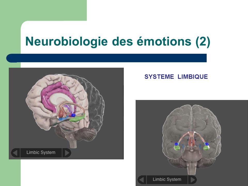 Neurobiologie des émotions (3)