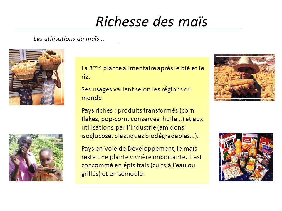 Richesse des maïs La 3 ème plante alimentaire après le blé et le riz. Ses usages varient selon les régions du monde. Pays riches : produits transformé
