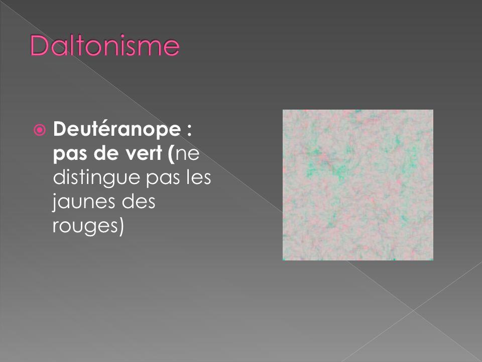 Protanope : pas de rouge ( ne distingue pas les violets des bleus )