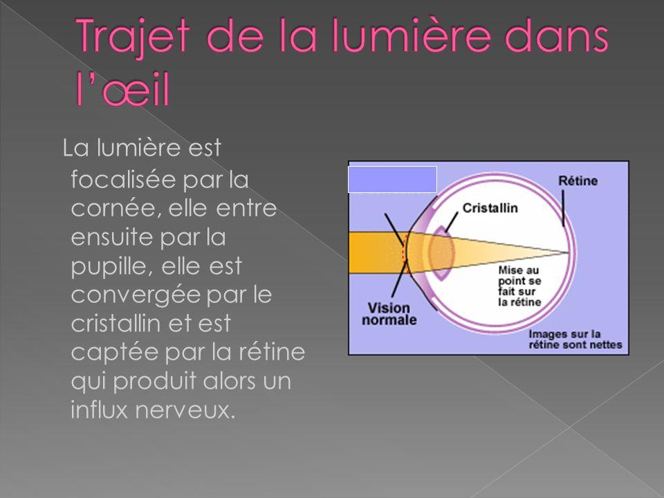 Champ visuel – voie visuelle - Marieb Le chiasma optique est le croisement des fibres médianes de chaque œil. Le tractus optique est lensemble des fib