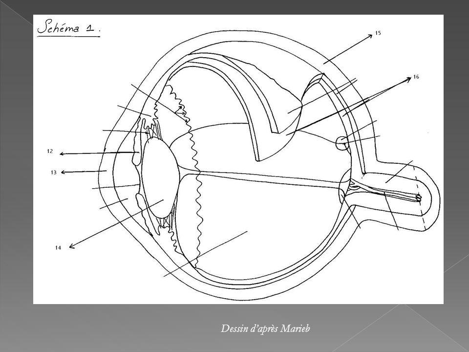 Lastigmatisme est causé par la déformation de la cornée qui est légèrement ovale. Donc, un astigmate ne voit pas bien de loin comme de près, les angle