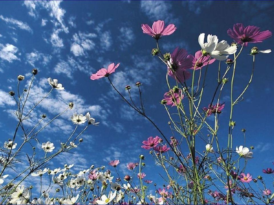 Mes yeux émerveillés se tourneraient vers le ciel enchanté… Je sentirais le bonheur m'envahir… J'écouterais la musique des Anges, ils viendraient fred