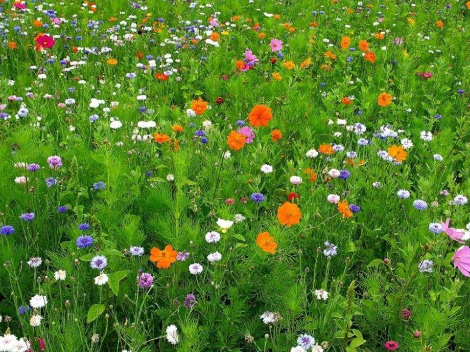 Ma promenade à travers ce champ entouré de ces jolies fleurs est terminée… Ce moment m'a fait du bien…Il m'a délassé… N'hésitez pas… Délectez-vous de