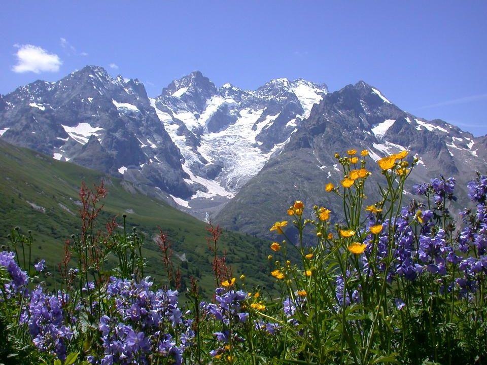 Je voudrais me promener dans un grand champ composé de fleurs multicolores… Sentir ce parfum à l'arôme délectable… Humer et respirer la liberté de viv