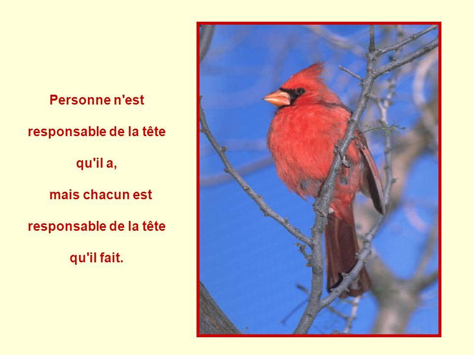 Personne n est responsable de la tête qu il a, mais chacun est responsable de la tête qu il fait.