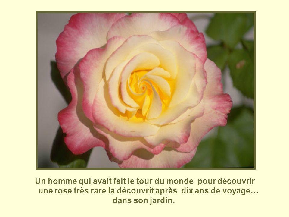 Un homme qui avait fait le tour du monde pour découvrir une rose très rare la découvrit après dix ans de voyage… dans son jardin.