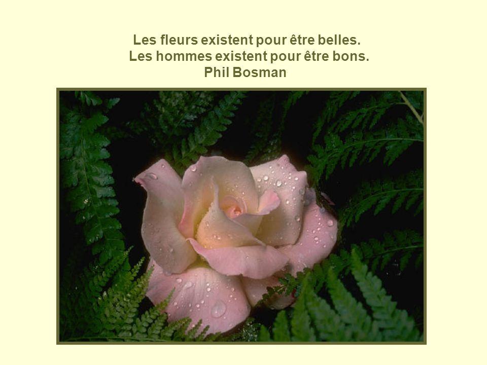 Les fleurs existent pour être belles. Les hommes existent pour être bons. Phil Bosman